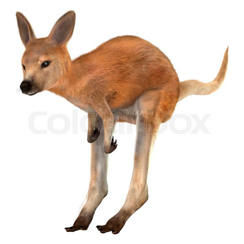Baby kangaroo jumping