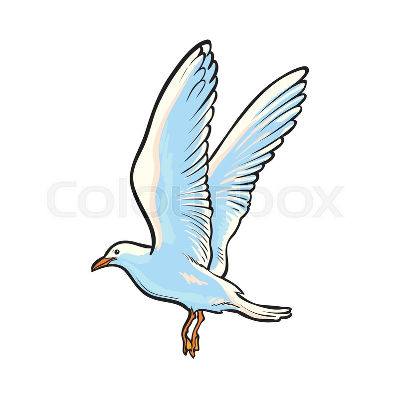 Flying seagull drawing