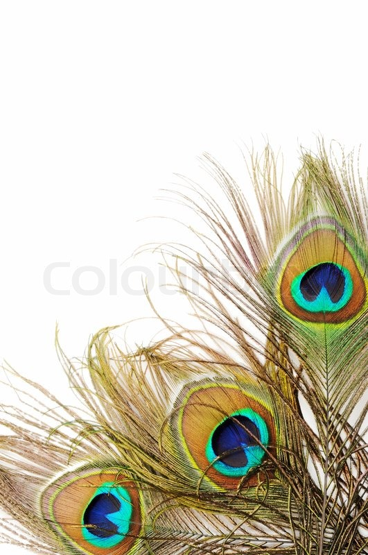 Peacock feather Stock Vectors Royalty Free Peacock
