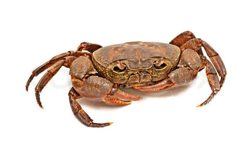 Blue swimmer crabs closed season  PeelHarvey Estuary