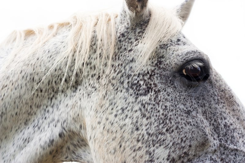White horse head pictures