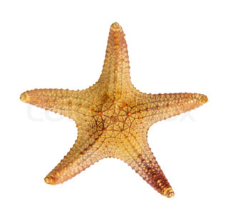 Starfish A Photo Of An Alive Starfish With Detailed Study Of Its