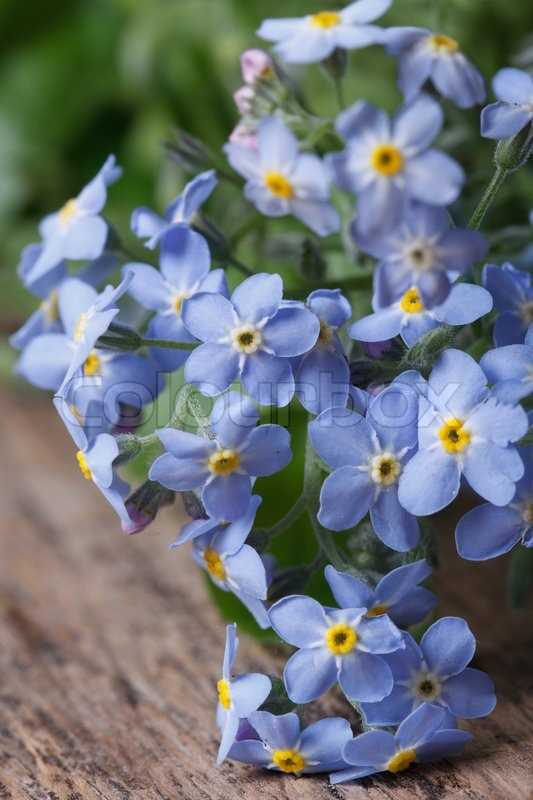 Bouquet of blue flowers forget-me-not. closeup on wooden vertical ...