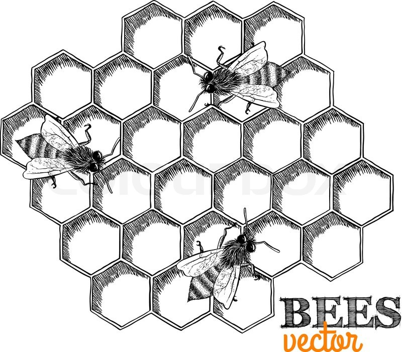 Honey bees and honeycomb isolated vector illustration stock honey bees and honeycomb isolated vector illustration stock vector colourbox ccuart Images