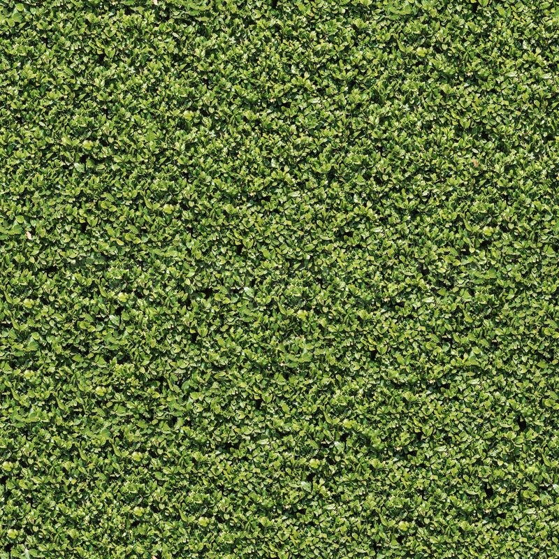 Evergreen Laurel Bush Surface. Seamless Tileable Texture ...