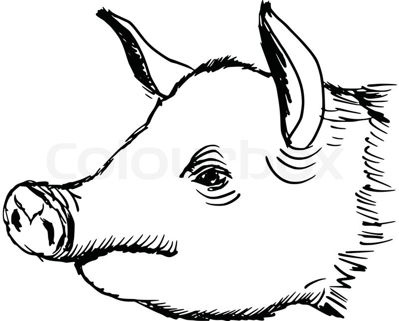 Line Drawing Of A Pig Face : Drawing realistic faces images