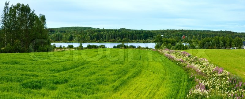 Summer country landscape with flowers on field and river (Sweden), stock photo