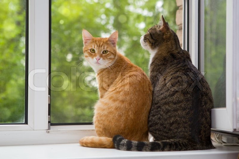 Perfect Red And Grey Cat Sitting On The Window Sill, Stock Photo