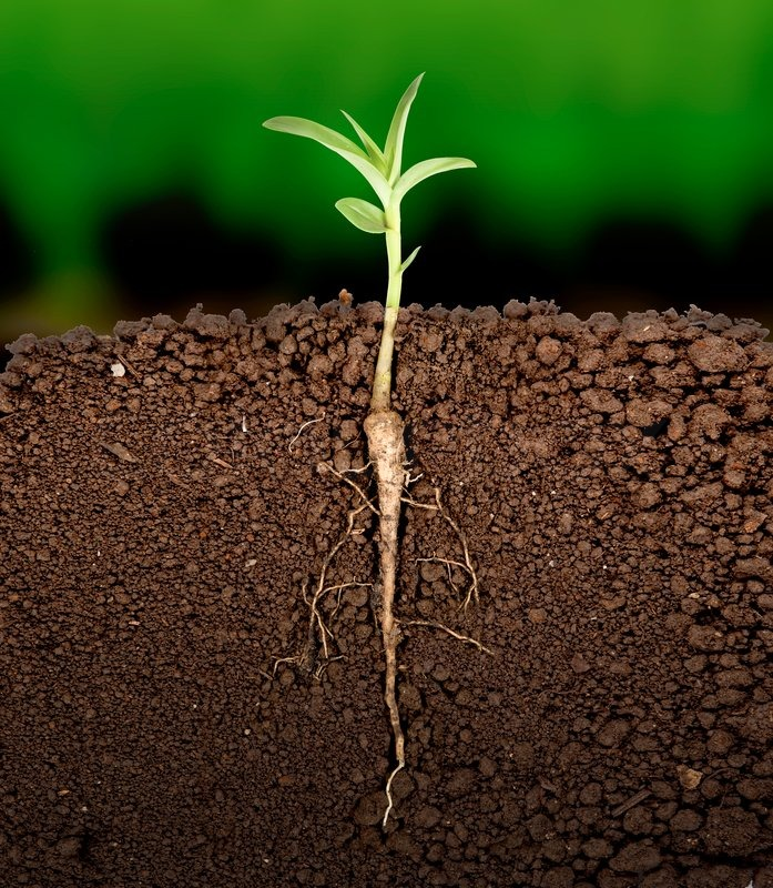 Growing plant with underground root visible | Stock Photo ...