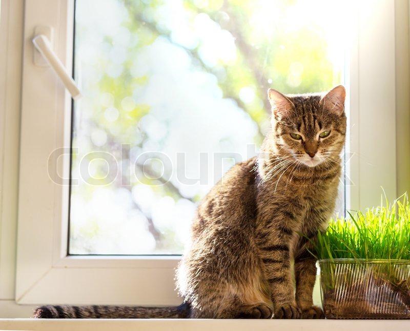cat attitude pictures