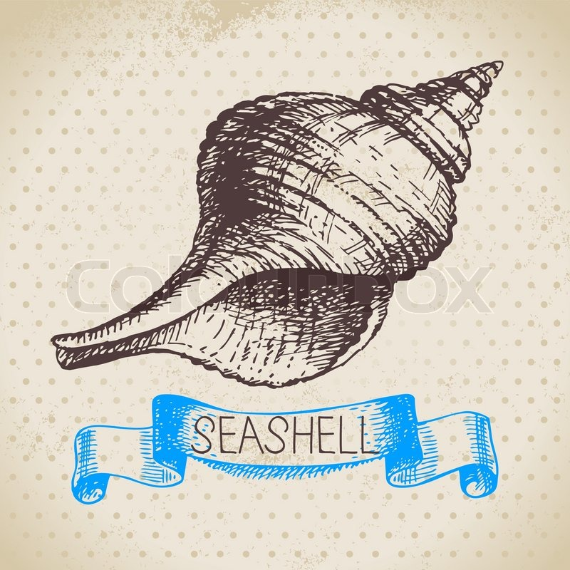 Seashells hand drawn sketch. Vintage illustration, vector