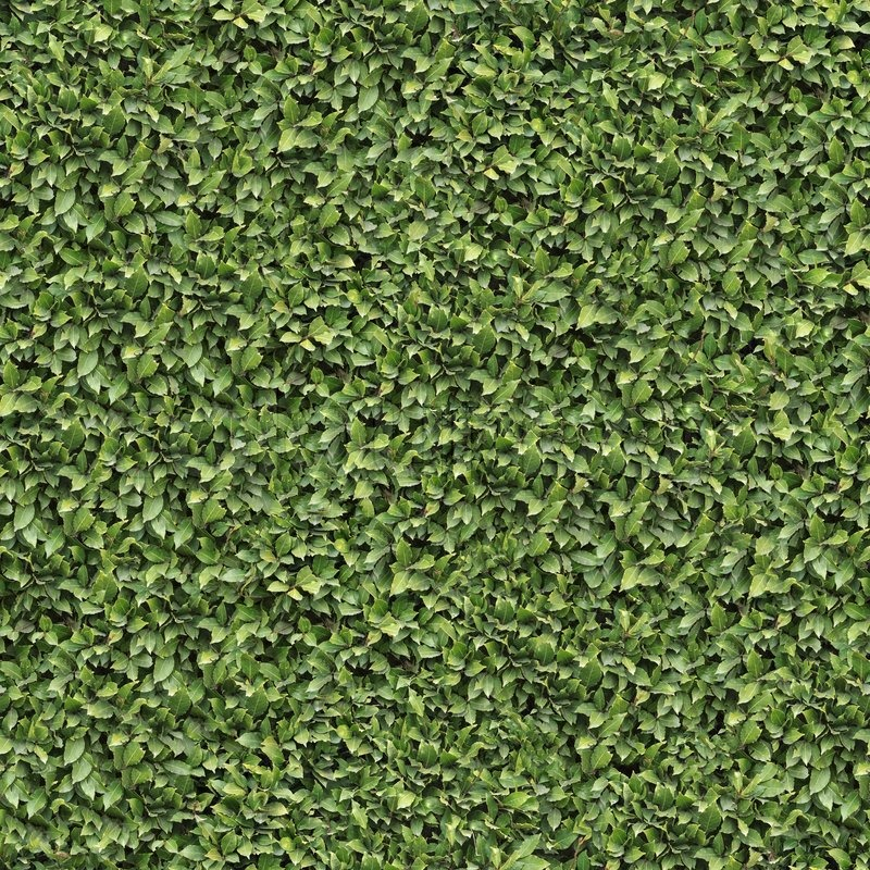 Laurel Bush Surface. Seamless Tileable Texture. | Stock ...