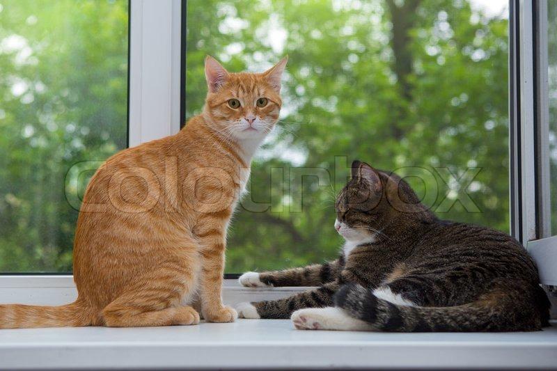 cat scratch rash itchy