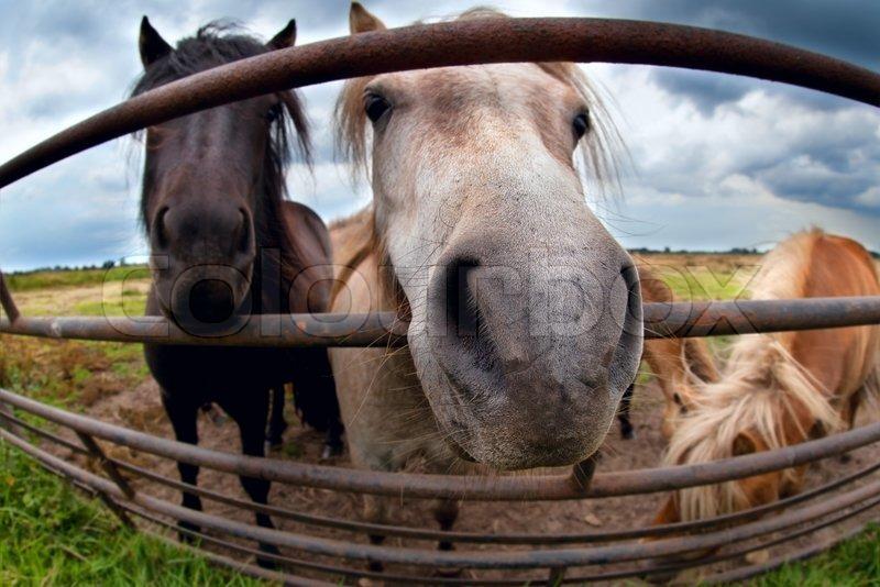 Lustige Pony Hinter Zaun Hautnah Stockfoto Colourbox