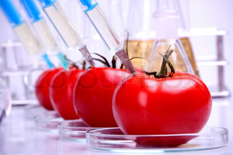genetically modified food and food additives essay