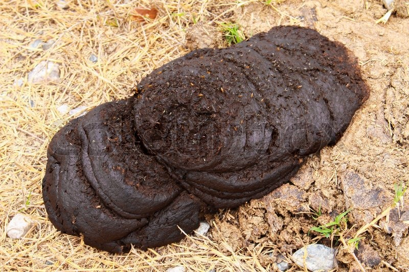 Dry cow dung and fly is dirty subject which yield manure for Organic soil meaning