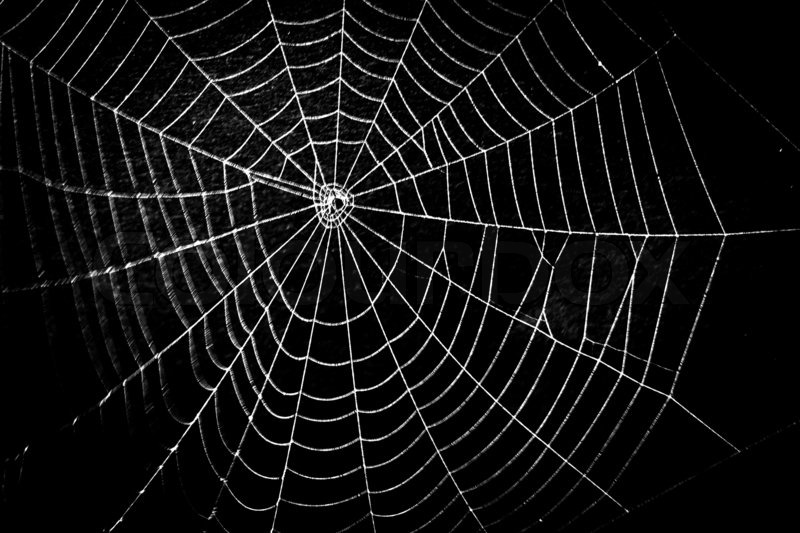 pretty scary frightening spider web for halloween stock photo colourbox - Spider Web Halloween