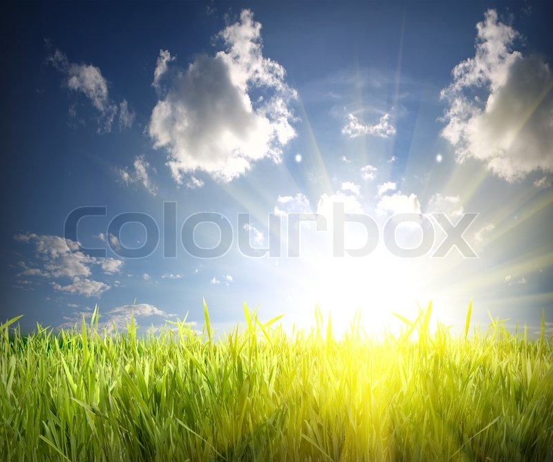 Green grass and blue sky over the sun rise, stock photo