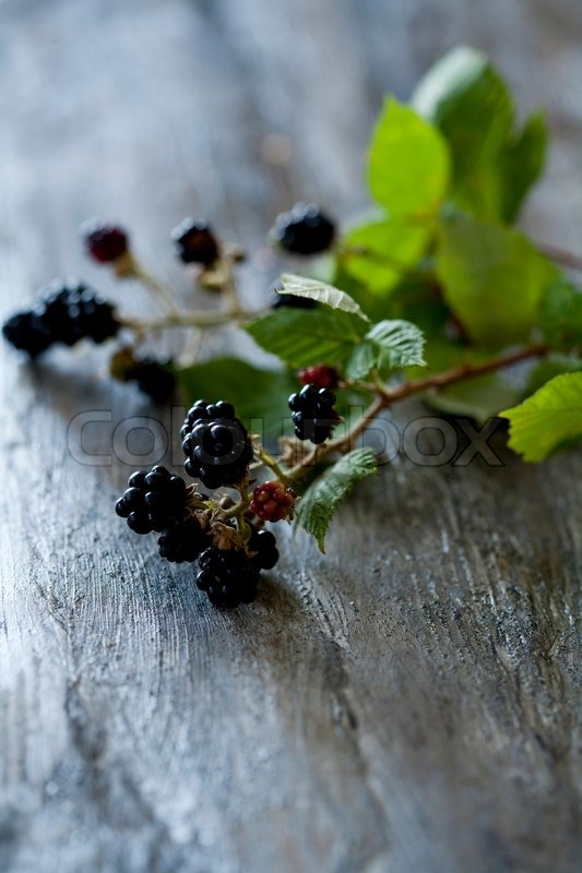 Stock image of 'Branch of blackberries used for decoration'