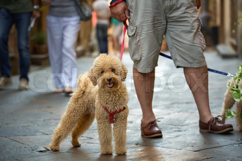 People walking on the street with dog on leash , stock photo