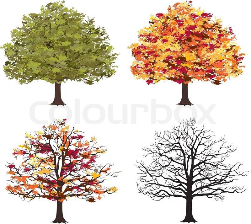 different seasons of art tree vector illustration. Black Bedroom Furniture Sets. Home Design Ideas