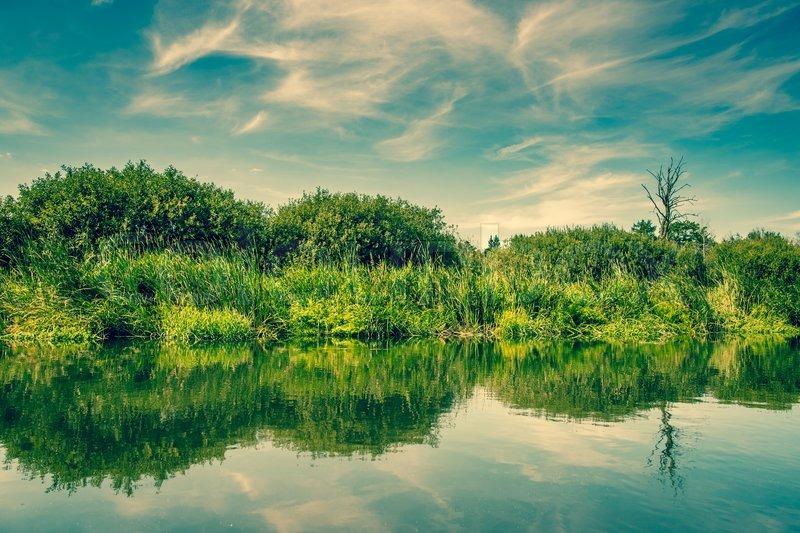 køb dildo billeder af naturen