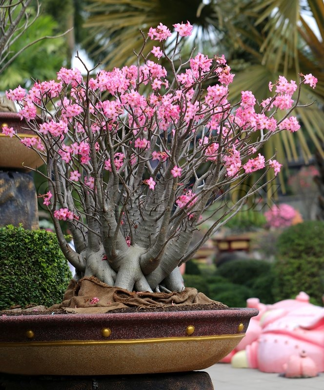 Flowering unusual beautiful bonsai tree in a park stock for 1800 flowers bonsai