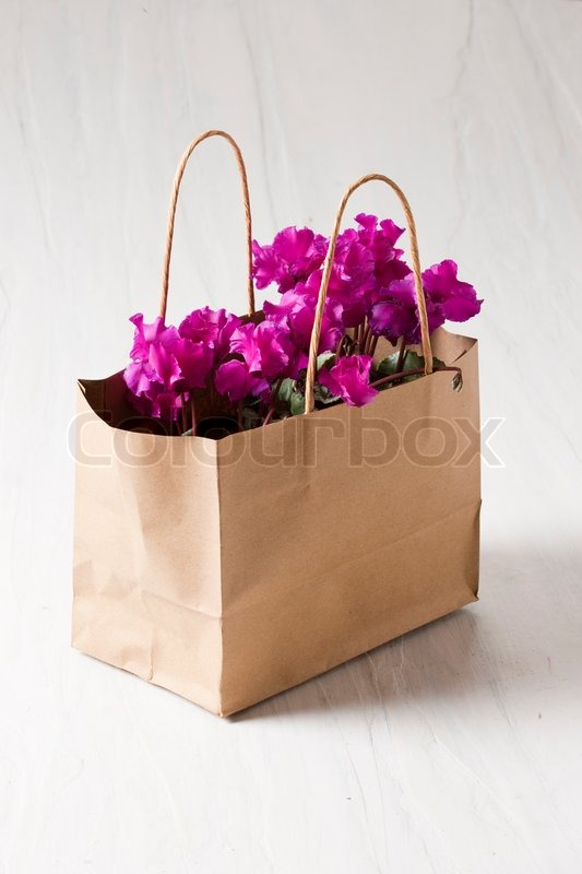 Cyclamen Flowers In Paper Bag Stock Photo Colourbox