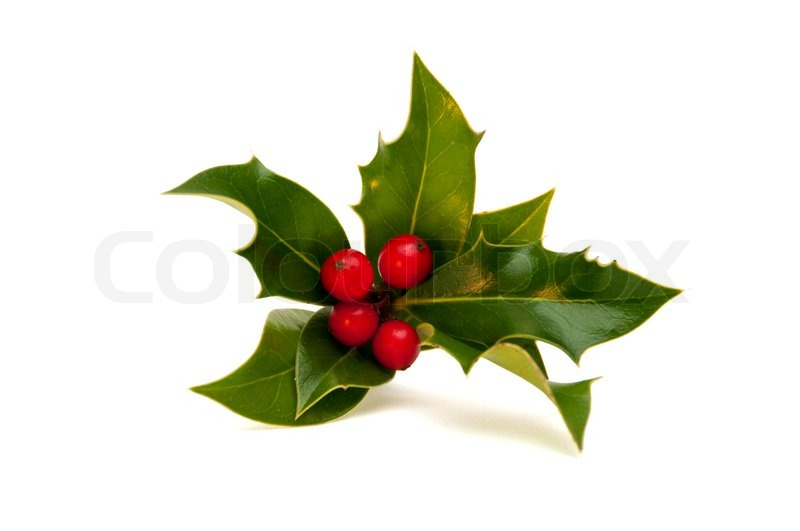 History of Holly - Why do we decorate with holly at Christmas? |  HowStuffWorks
