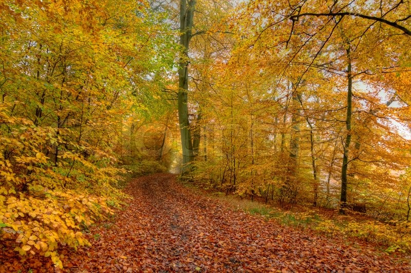 Efterår i skoven.  Autumn in the forest. | Stock foto | Colourbox