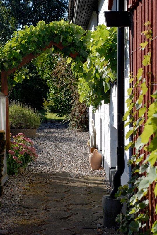 Super Blick auf den Garten mit Wein Pflanzen | Stock Bild | Colourbox &OH_39