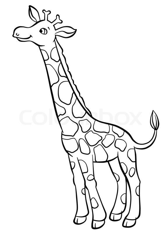 Cute giraffe eating leaves from the stock image for Immagini giraffa per bambini