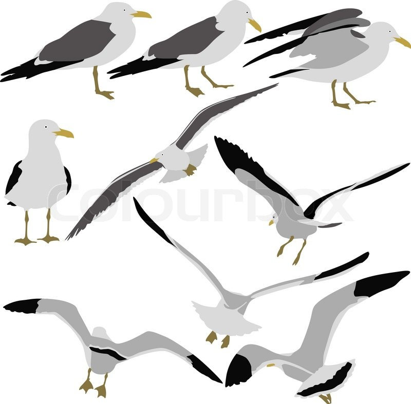 Set black silhouettes of seagulls on white background ...