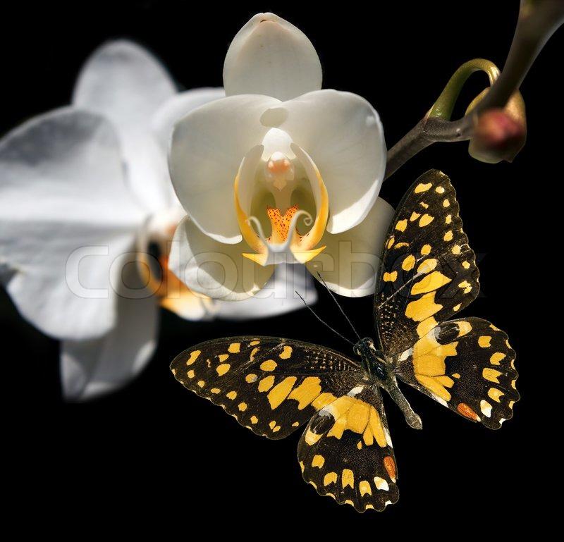 Набор Набор Танец Бечевка Бабочка галстуЛистья орхидея