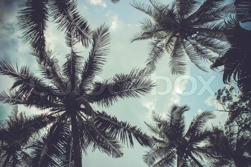 Stock image of 'branches of coconut palms under blue sky in retro style'
