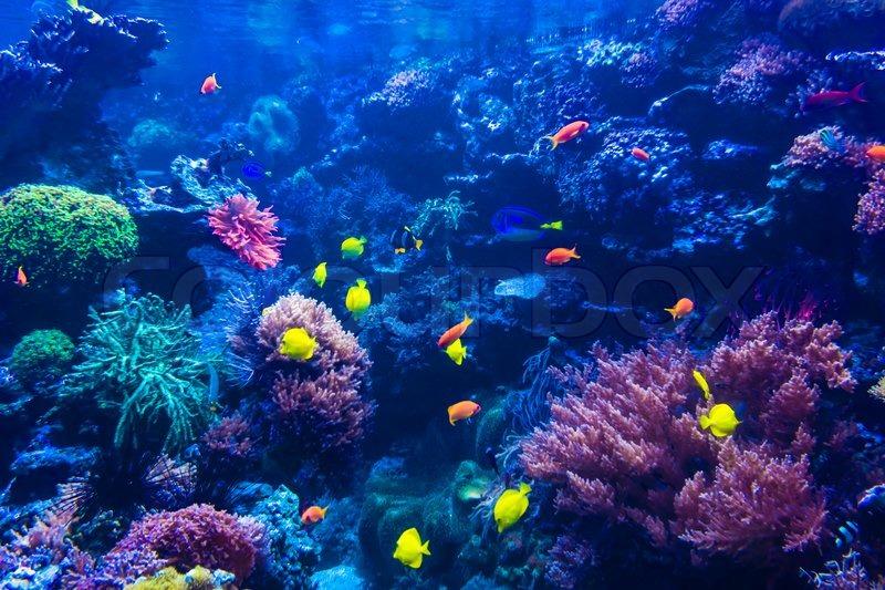 Tropical Fishes Meet In Blue Coral Reef Sea Water Aquarium Underwater Paradise