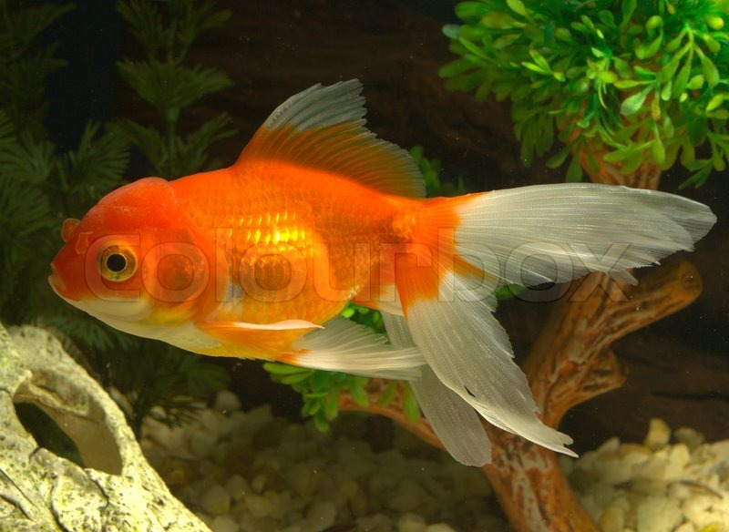 Fisk tier wasser stockfoto colourbox for Ok google plenty of fish