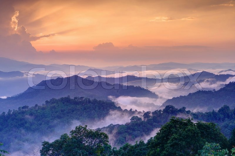 Twilight landscape in rain forest, HDR process from 5 captures, stock photo