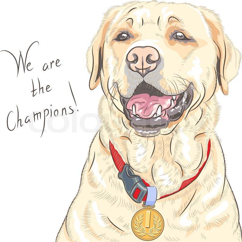 Vector dog breed Labrador Retriever champion | Stock Vector | Colourbox