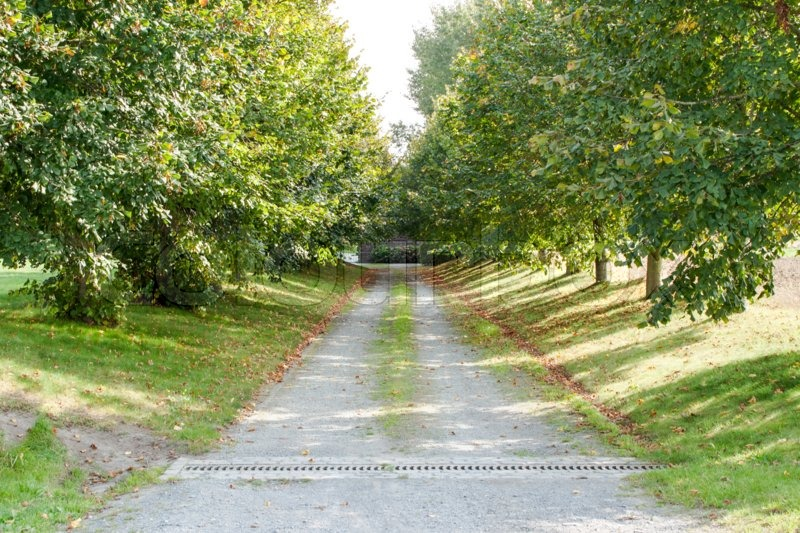 A driveway avenue of trees in the sun, stock photo