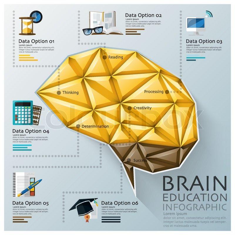 Brain Shape Three Dimension Polygon Education Infographic Design ...