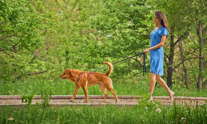 Beautiful young woman walks with dog Labrador retriever in summer park, stock photo