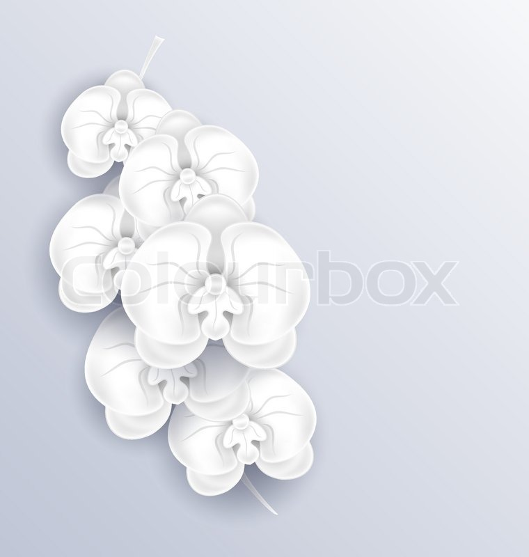 Illustration branch of beautiful orchids paper craft template with illustration branch of beautiful orchids paper craft template with copy space for your message or text vector stock vector colourbox mightylinksfo