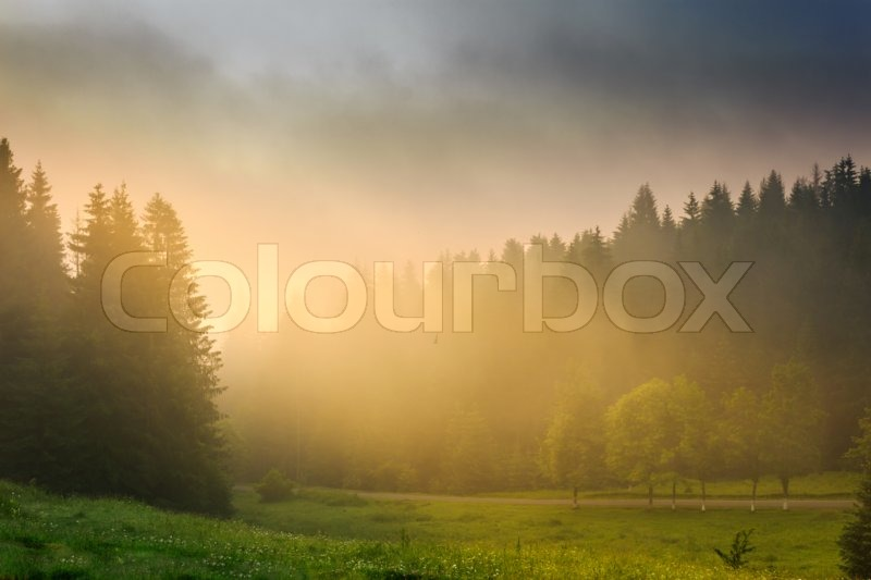 Stock image of 'rays of the morning sun breaking through the clouds and fog to the clearing of coniferous forests'