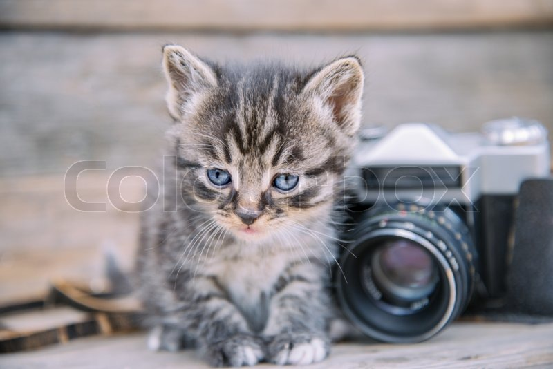 Cute kitten sits near vintage photo camera on a wooden table, stock photo