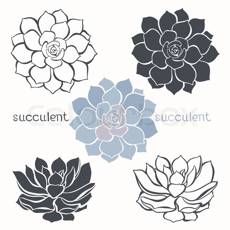 Graphic set with succulents isolated on white background hand drawn graphic set with succulents isolated on white background hand drawn vector illustration sketch elements for design stock vector colourbox mightylinksfo