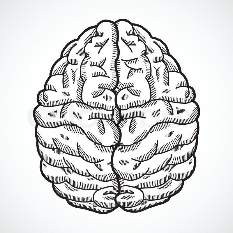 Nerv, bild, anatomie | Vektorgrafik | Colourbox