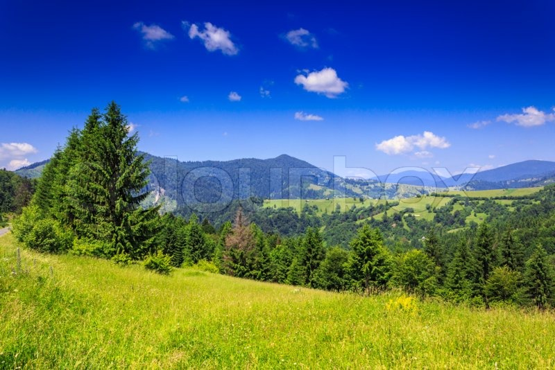 Stock image of 'green meadow with trees in front of a mountain view on serene summer day'