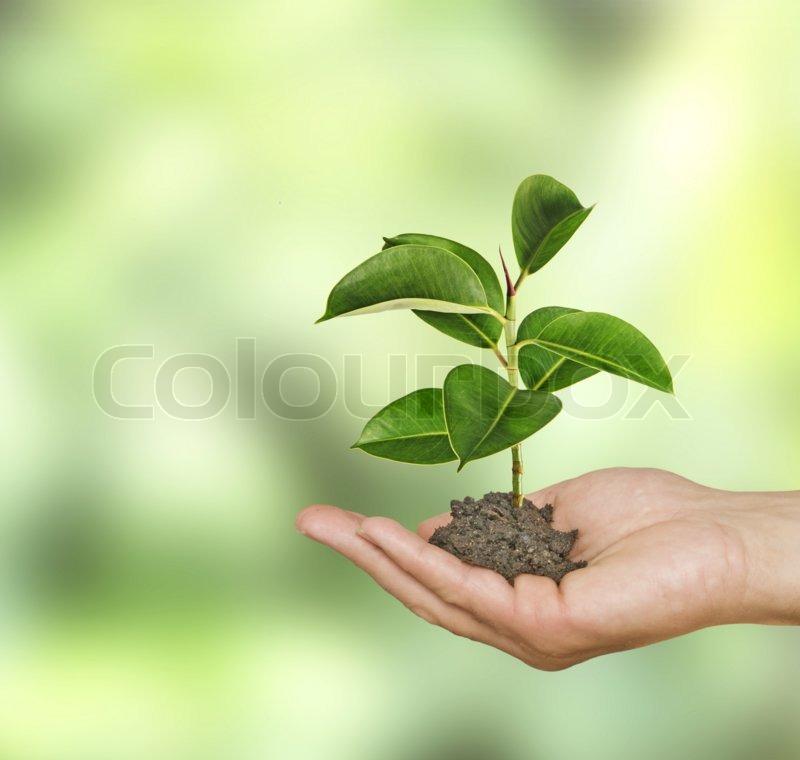 Sapling in hand, stock photo