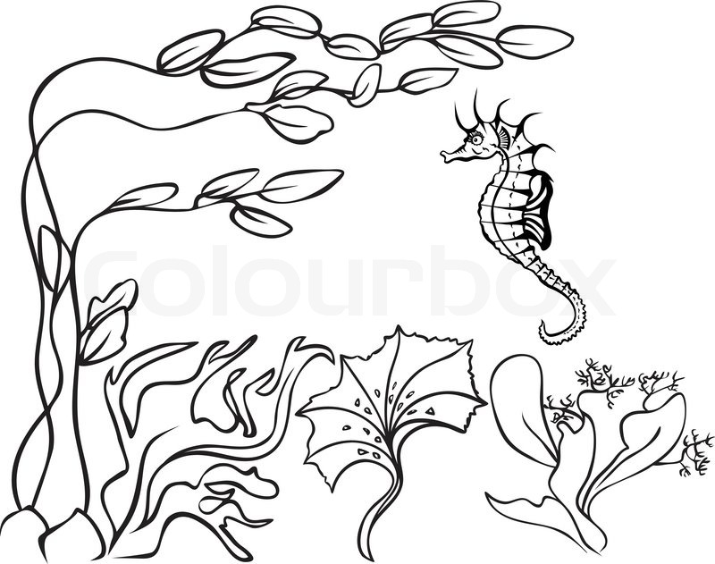 Sketch Underwater Seaweed And Sea Stock Vector